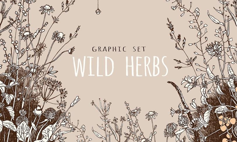dzikie zioła darmowy set grafik