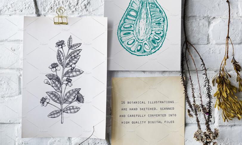 darmowy zestaw ilustracji
