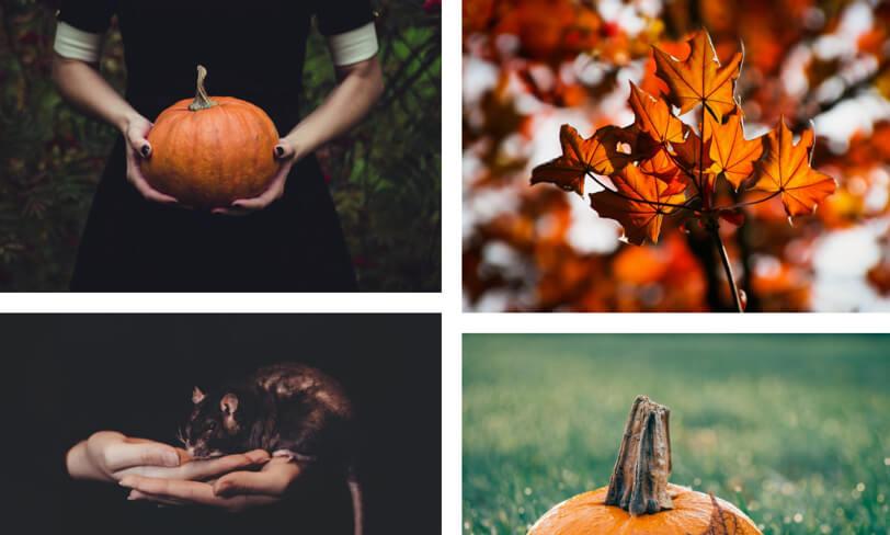 darmowe zdjęcia halloween