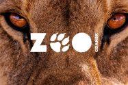Rebranding miesiąca ZOO Gdańsk – tofu studio