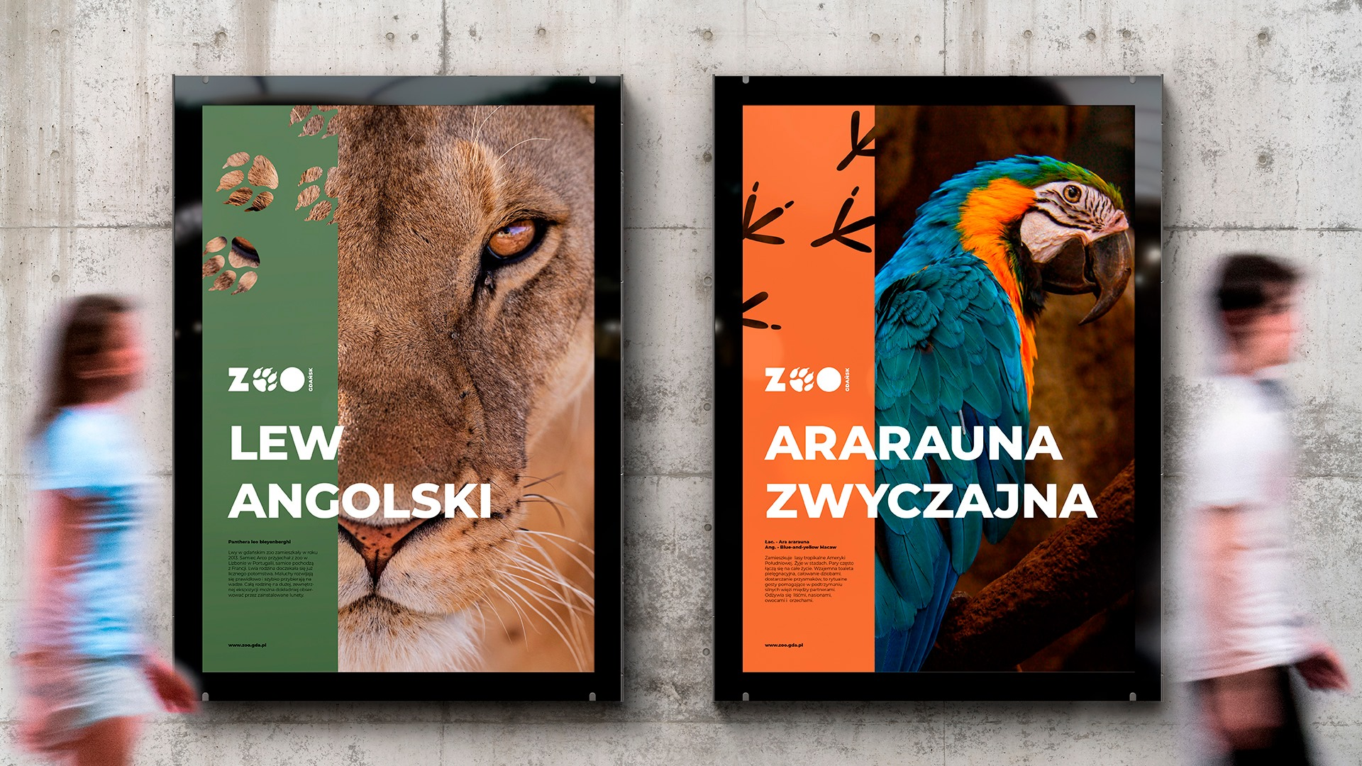 Zoo Gdańsk plakaty